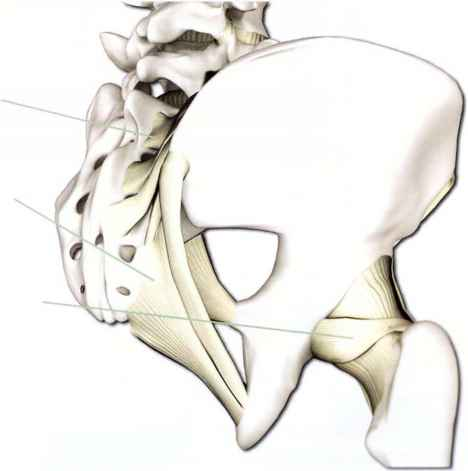 Ligaments Anterior Hip