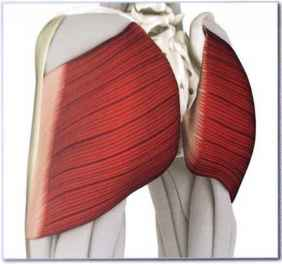 Gluteus Maximus Origin And Insertion