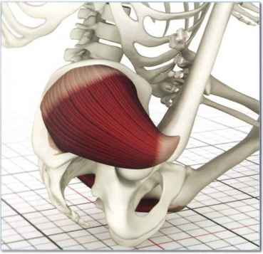 Gluteus Maximus Stretch