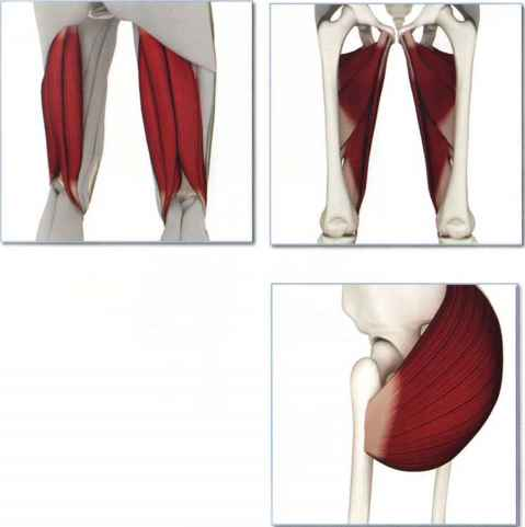 Band And Gluteus Muscle