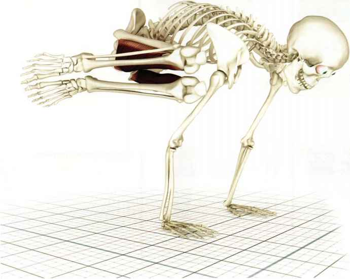 Gracilis Stretches