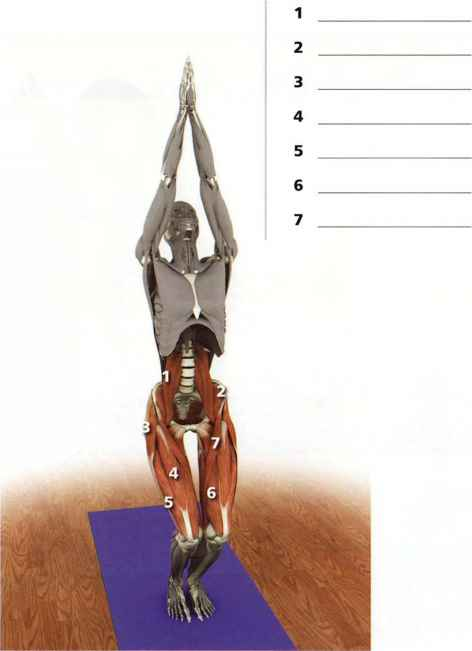 Marichyasana Anatomy Key Muscles Yoga