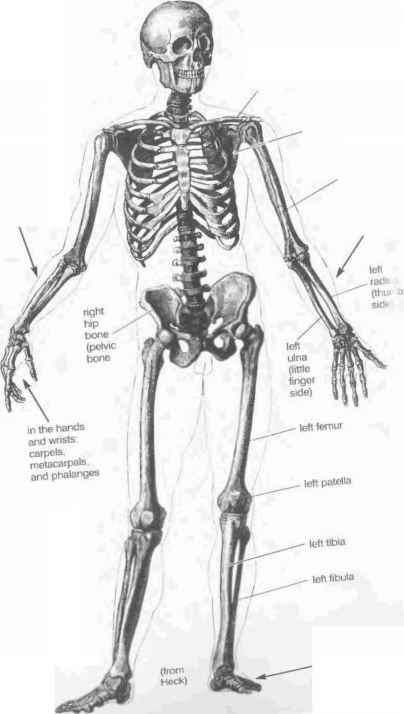 Yoga For Skeletal Movement