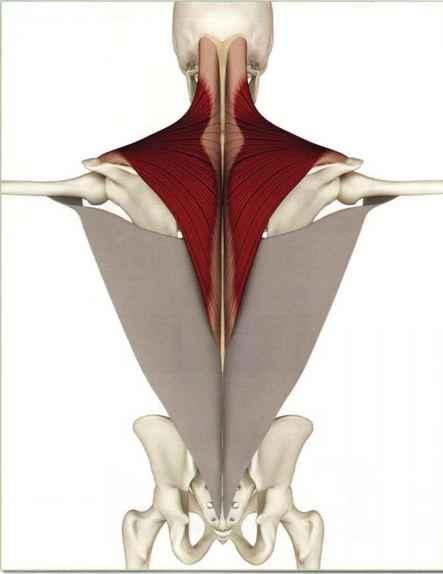 the key poses of hatha yoga ray long pdf