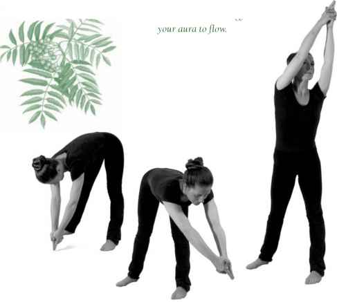 Back Bending Yoga Sequence